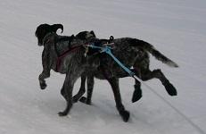 Björkis Hundprodukter